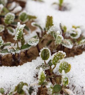 winter frosty jan2014 - 6 (1)-crop-u7243